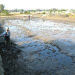 Hướng dẫn cải tạo, chuẩn bị thả giống thủy sản năm 2016