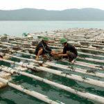 Nuôi thủy sản sạch cần lưu ý những gì?