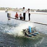 Khuyến cáo nuôi tôm nước lợ năm 2016 các tỉnh Nam bộ - khuyen cao ky thuat dau vu nuoi tom tham canh ban tham canh phan 2 phan cuoi 1459532976 150x150