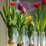 Trồng hoa tulip trong nước cực đơn giản cho nhà thêm lung linh