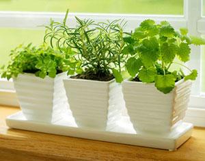 Bỏ túi kỹ thuật trồng rau gia vị tại nhà an toàn, xanh tốt quanh năm - ky thuat trong rau gia vi tai nha an toan xanh tot.01