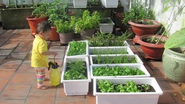 Bỏ túi kỹ thuật trồng rau gia vị tại nhà an toàn, xanh tốt quanh năm - ky thuat trong rau gia vi tai nha an toan xanh tot.04