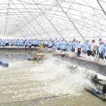 Lạm dụng thuốc kháng sinh trong nuôi trồng thủy sản