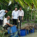 Kỹ thuật cho lươn sinh sản bán nhân tạo và thuần hóa lươn đồng