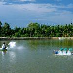 Phương pháp sử dụng thức ăn tự chế trong nuôi trồng thủy sản - phuong phap su dung thuc an tu che trong nuoi trong thuy san 150x150