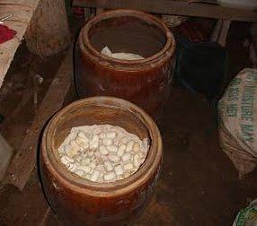 Kỹ thuật nuôi rắn ráo trâu (hổ hèo) - ran rao trau3