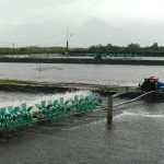 Hướng dẫn kỹ thuật thả giống nuôi tôm nước lợ - shrimp farm 1 150x150