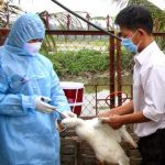 Cách tiêm vắc xin Navet- Vifluvac Subtype H5N1 - tiem vac xin cho vit 150x150