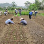 Ngâm nước đất trồng, xử lý sâu bệnh - trong rau 20151031062720 150x150