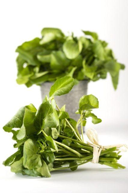 Trồng 'siêu thực phẩm' rau mầm cải xoong ngừa ung thư - trong sieu thuc pham rau mam cai xoong ngua ung thu 1 426x640