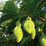 Mô hình trồng cây dó bầu - untitled 1 01 150x150