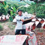 Bị ong đốt thành... triệu phú - 1463646379 dv chinh42 150x150