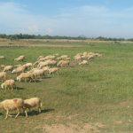 Mưa xuống, người chăn nuôi hết cảnh chạy ăn từng bữa - 1464582014 cuu 1 150x150