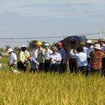 Giống Lúa khảo nghiệm thu hút nông dân xứ Nghệ