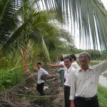 Chăm sóc Dừa sau hạn, mặn