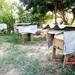 Những cách chống nắng nóng cho đàn Ong