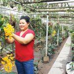 Nữ nông dân đam mê với lan rừng, thu vài tỷ đồng mỗi năm - 146666724244577 dv chinh37 150x150