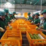 Quy trình công nghệ bảo quản rau quả tươi xuất khẩu