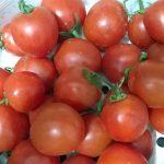 Ăn Cà Chua đúng cách không hề dễ! - ca chua tomato2 150x150