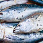 Mẹo nhận biết cá biển tươi và cá nhiễm độc