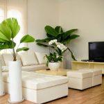 Cách trang trí cây cảnh trong phòng khách - cay xanh phong khach 150x150