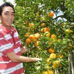 Tăng năng suất, giảm chi phí vườn cây ăn trái bằng hệ thống tưới tự động