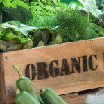 Mẹo giúp cả nhà dễ dàng mua được rau hữu cơ - hanh xinh63 150x150