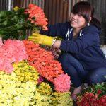 Kỹ thuật bảo quản hoa Hồng sau thu hoạch - hoa da lat udor 150x150