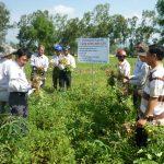 Bình Định: Mô hình trồng lạc xen sắn hiệu quả cao