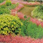 Bố trí các luống hoa và bờ bao trong trang trí sân vườn