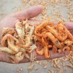 Mẹo hay phân biệt Tôm khô tự nhiên và Tôm khô hóa chất - meo hay phan biet tom kho tu nhien va tom kho hoa chat 150x150