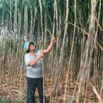 Lào Cai: Trồng Nấm cho năng suất chất lượng tốt, thu nhập cao