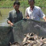 Ninh Bình: Áp dụng đúng kỹ thuật tăng năng suất nuôi cá trên ruộng trũng