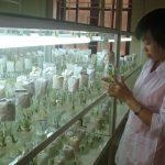 Nhân giống thành công hoa Lily bằng phương pháp bioreactor
