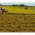 Ứng dụng GIS nâng cao chất lượng quản lý phát triển nông nghiệp tại Cần Thơ - nongnghiepcantho 150x150