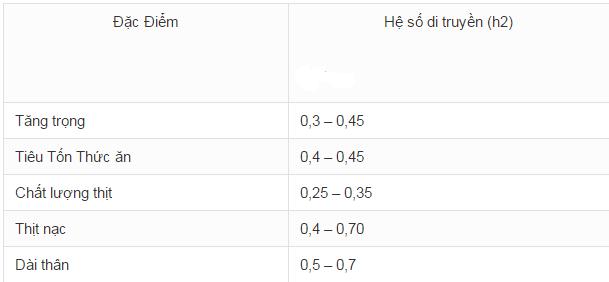 Những yếu tố ảnh hưởng đến việc chăn nuôi Heo nái mắn đẻ - nuoi heo thit1