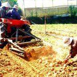 Tăng năng suất trồng trọt với máy đào Khoai Tây siêu nhanh