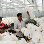Lâm Đồng: Nền nông nghiệp công nghệ cao hướng đến năng suất chất lượng - tang nang suat 291 150x150