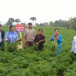 Tăng năng suất chất lượng cây trồng ở Bắc Ninh với phân bón Silic