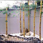Trồng cây xanh trong vườn phù hợp phong thủy