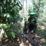 Tưới nước tiết kiệm giúp nâng cao năng suất nông nghiệp tại Đăk Nông