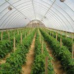 Ứng dụng mô hình trồng rau trong nhà lưới cho năng suất chất lượng
