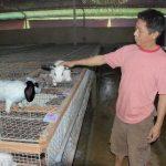 Kinh nghiệm cho Thỏ giao phối hiệu quả