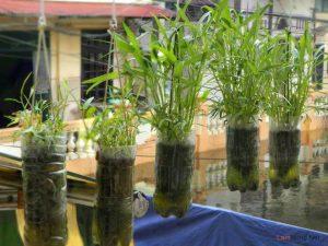 Hiện thực hóa ý tưởng trồng rau trên sân thượng - 133601 11 300x225