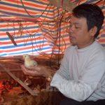 Hiệu quả từ chăn nuôi Gà an toàn sinh học - 134546 hieu qua tu chan nuoi 150x150