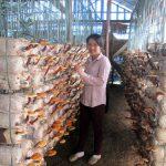 Kinh nghiệm trồng nấm Linh Chi đỏ