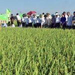 """Xây dựng thương hiệu từ giống Lúa """"5 chuẩn"""" - 1465471889 dv chinh11 150x150"""