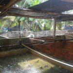Bí quyết giúp Ếch sinh sản bằng hệ thống phun mưa - 1465791845 ech 1 150x150