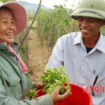 Trồng hoa Thiên Lý cho thu hoạch 200 triệu đồng/ha