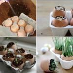 Trồng cây trong vỏ trứng – lựa chọn tuyệt vời!